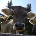 Profilbild von Julianna